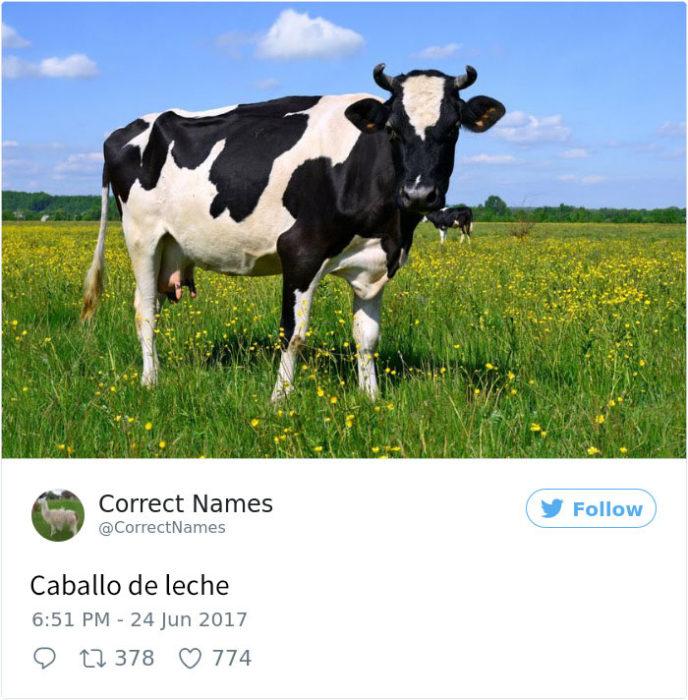 caballo de leche