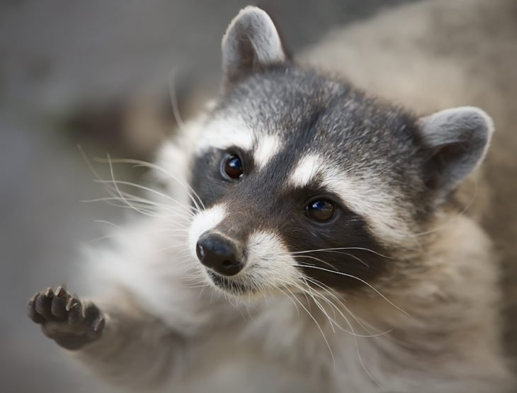 mapaches tiernos 3