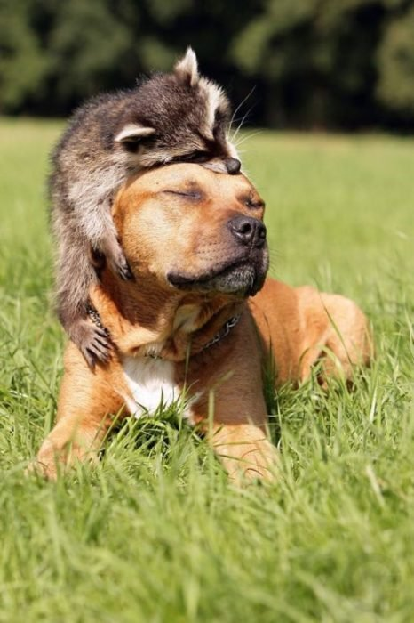 mapaches tiernos 6