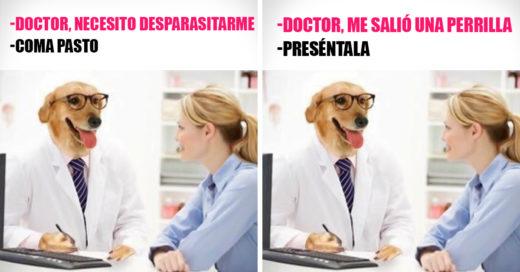 20 Memes del Dr. Perro que necesitas para combatir el aburrimiento