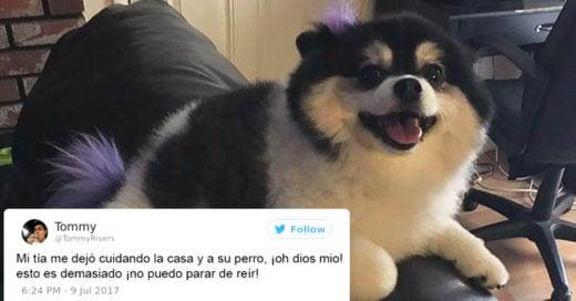 Esta mujer tiene miedo de dejar a su perro con el niñero y le escribe una lista de reglas