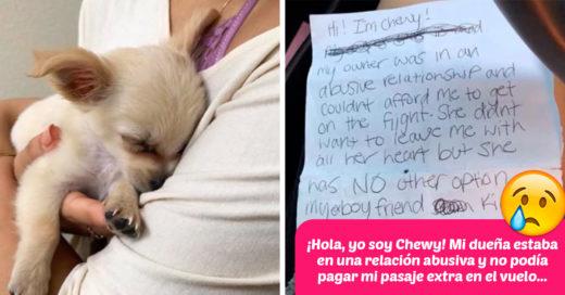 Este cachorro fue abandonado en el aeropuerto junto a una emotiva carta; todo Internet quiere adoptarlo