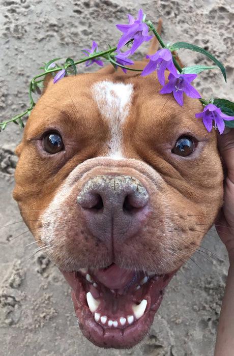 perrito adoptado 10