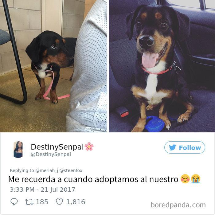perrito adoptado 5