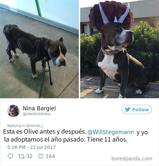 perrito adoptado 6