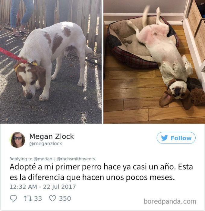 perrito adoptado 7