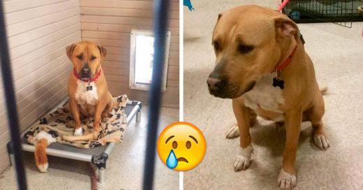 Nadie quería adoptar a este perrito así que cayó en una enorme depresión