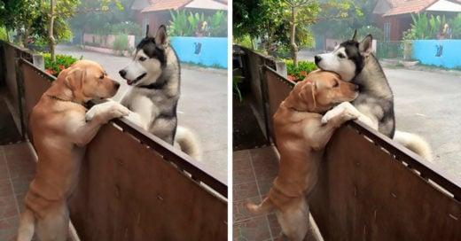 Este perro se sentía tan solo que se escapó para abrazar a su mejor amigo
