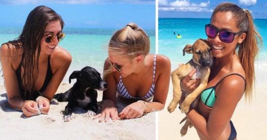 Potcake Place la isla donde puedes disfrutar de la playa y un cachorro