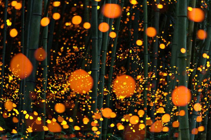 foto de larga exposicion de bosque de luciernagas