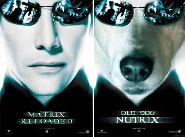 matrix reloaded póster con perro como protagonista
