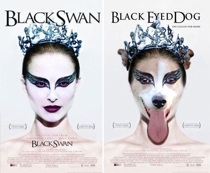 black swan póster con perro como protagonista