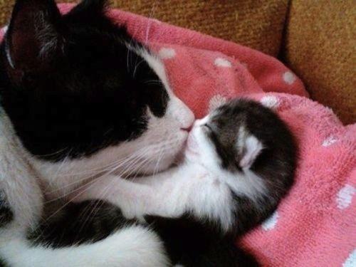 animal mom