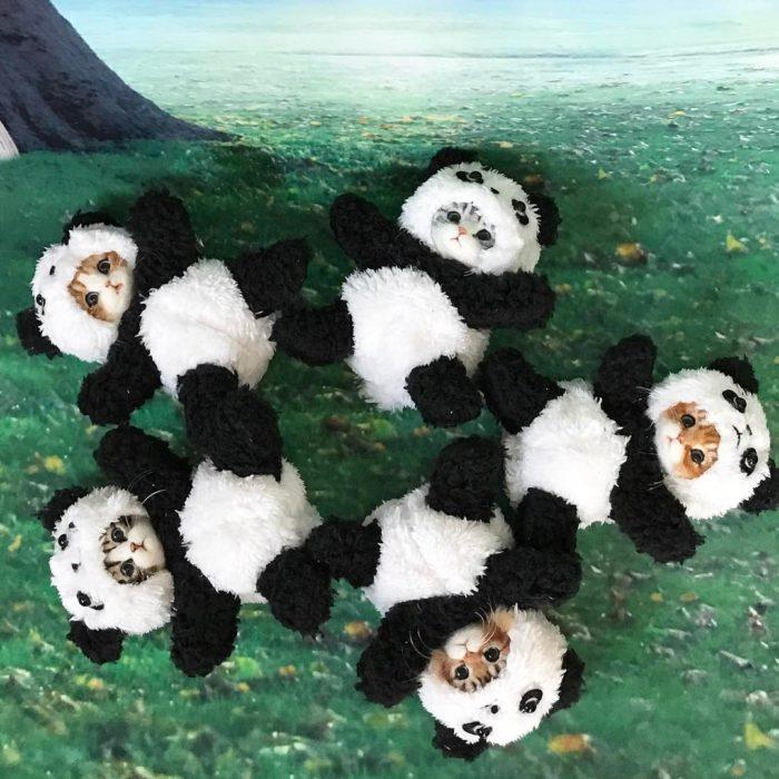 Muñecos de lana con trajes de oso panda