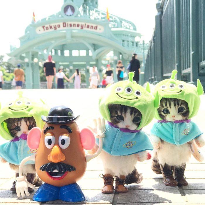Gatos de lana en Disneylandia con el señor cara de papa