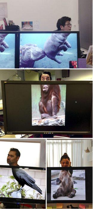 compañeros de oficina posando como animales