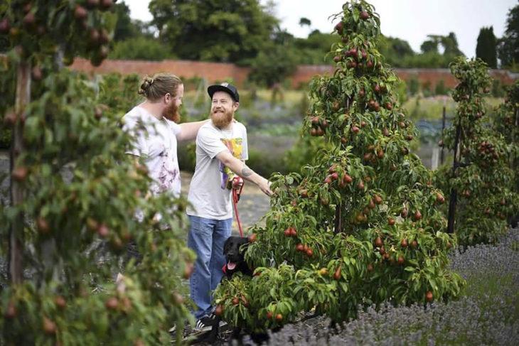 chicos cortando tomates en el campo