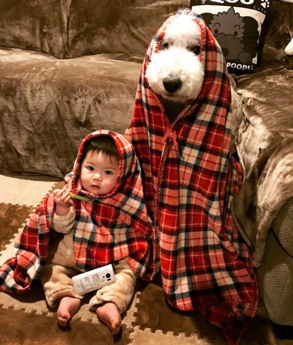 Mame niña japonesa y Riku caniche blanco con frazadas en el sofa