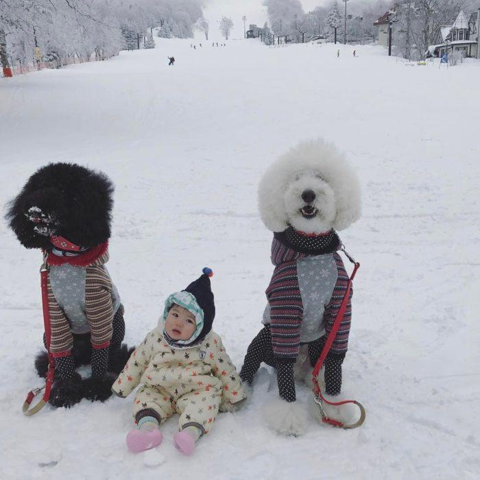 Mame Riku y Qoo en la nieve