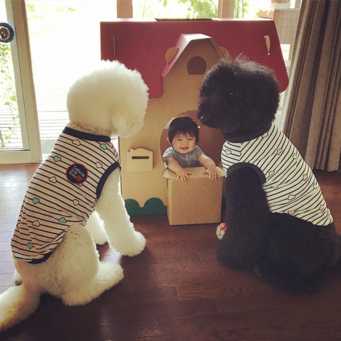 Mame Riku y Qoo jugando en la casa