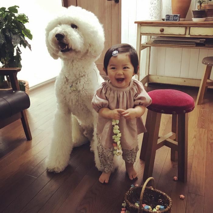 Mame niña japonesa y Riku caniche gigante blanco riendose