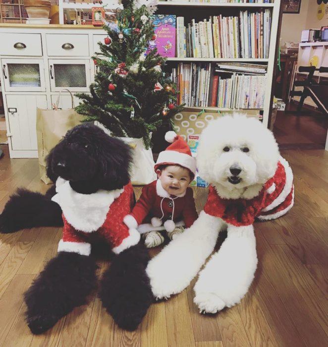 Mame y los caniches en navidad