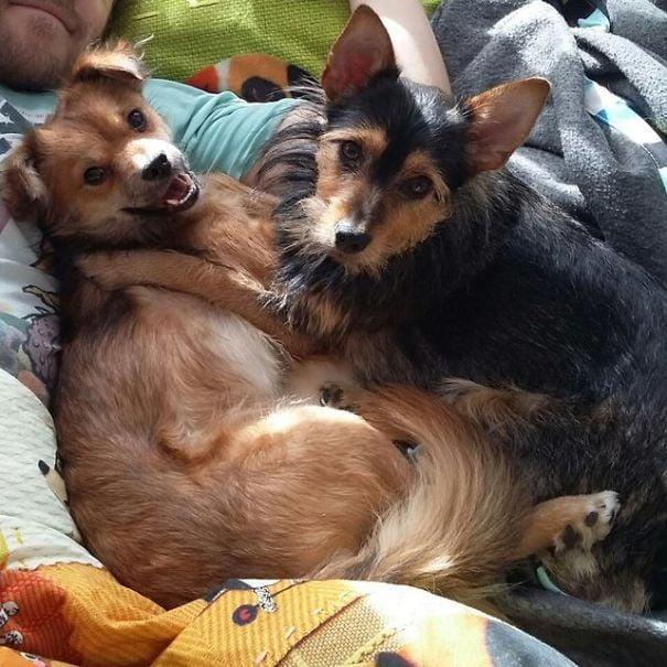 Perrito junto a otro mientras están recostados en una cama