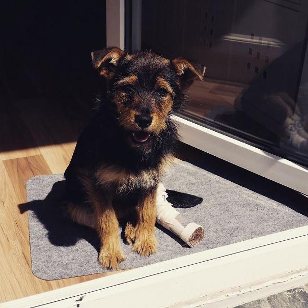 Perrito sentado mostrando el yeso que tiene en su pierna