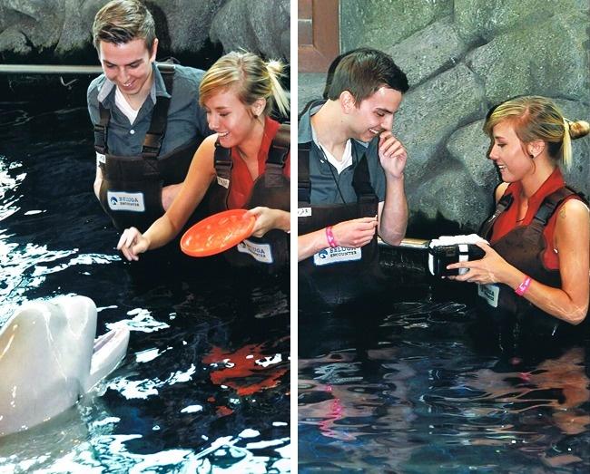 pareja d enovios nadando con delfines
