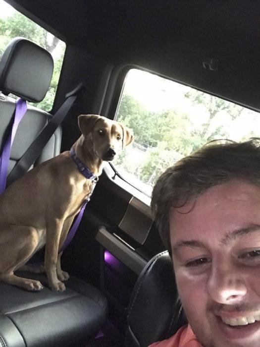 perro sentado en el asiento trasero del carro