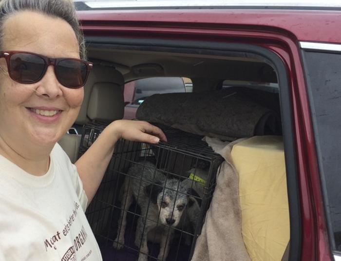 señora cuidando a un perro