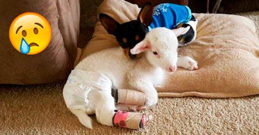 Este perrito perdió a su mejor amiga, por eso le dieron un muñeco que luce justo como ella