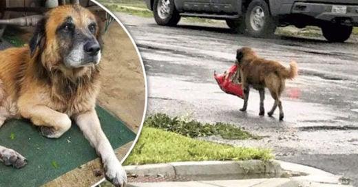 Este perrito trataba de ponerse a salvo del huracán Harvey, sin olvidar la bolsa de su comida