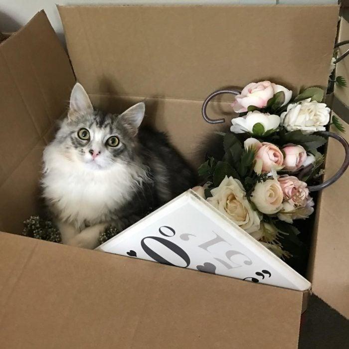 gatito adentro de una caja