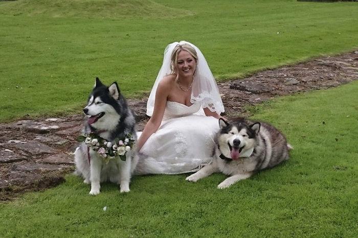 malamutes con la novia en el jardín