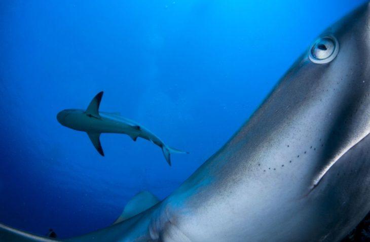 tiburones en Cuba