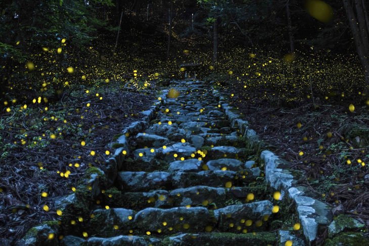 escaleras en Japón con luciernagas