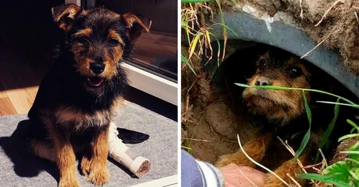 Esta pareja decidió darle una nueva oportunidad de vida a este cachorro