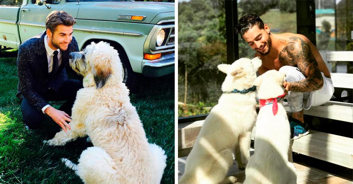 15 Cachorros con dueños famosos muy guapos