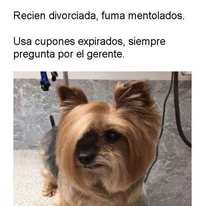 Sharon perros personalizados