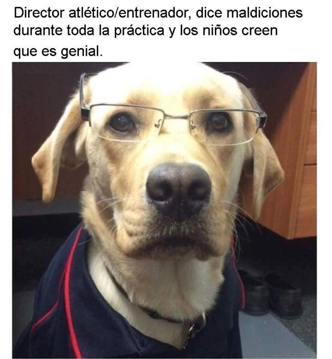 Mark perros personalizados