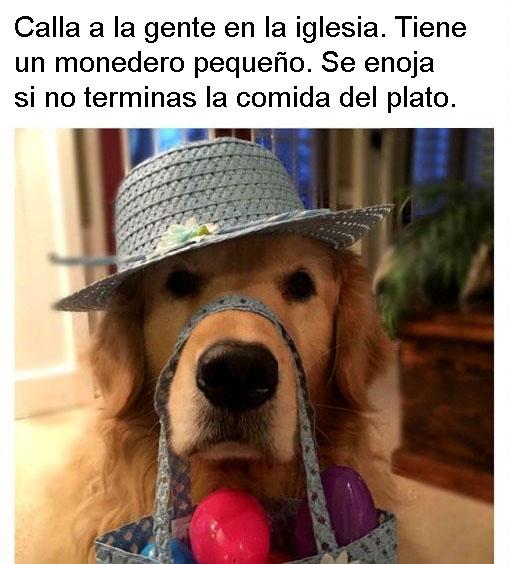 Dora perros personalizados