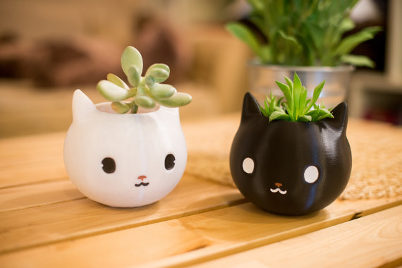 macetas de gato