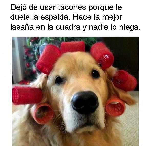 Nancy perros personalizados