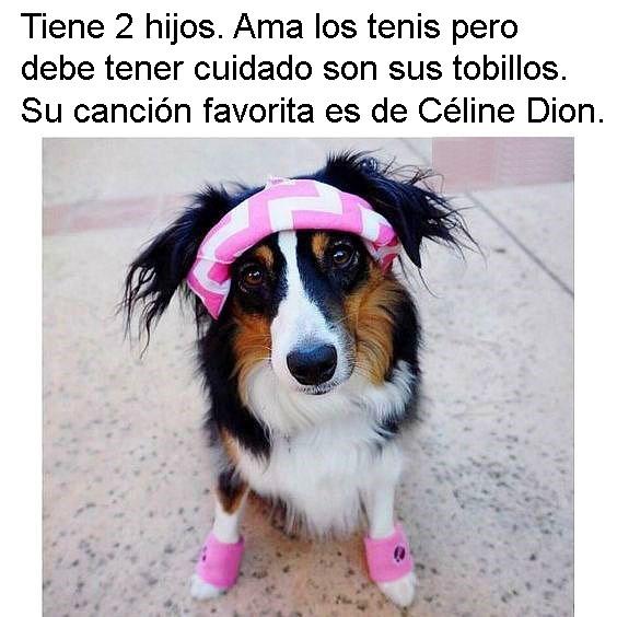 Amy perros personalizados