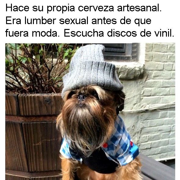 ruben perros personalizados