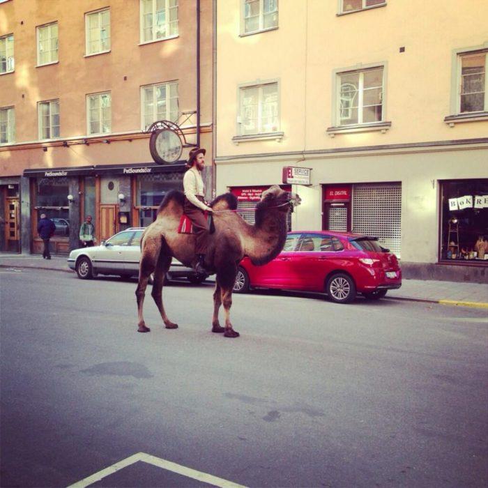 pasear en tu camello