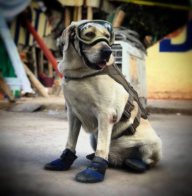 Perro con gafas y botas