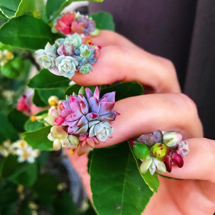 flores pequeñas de colores