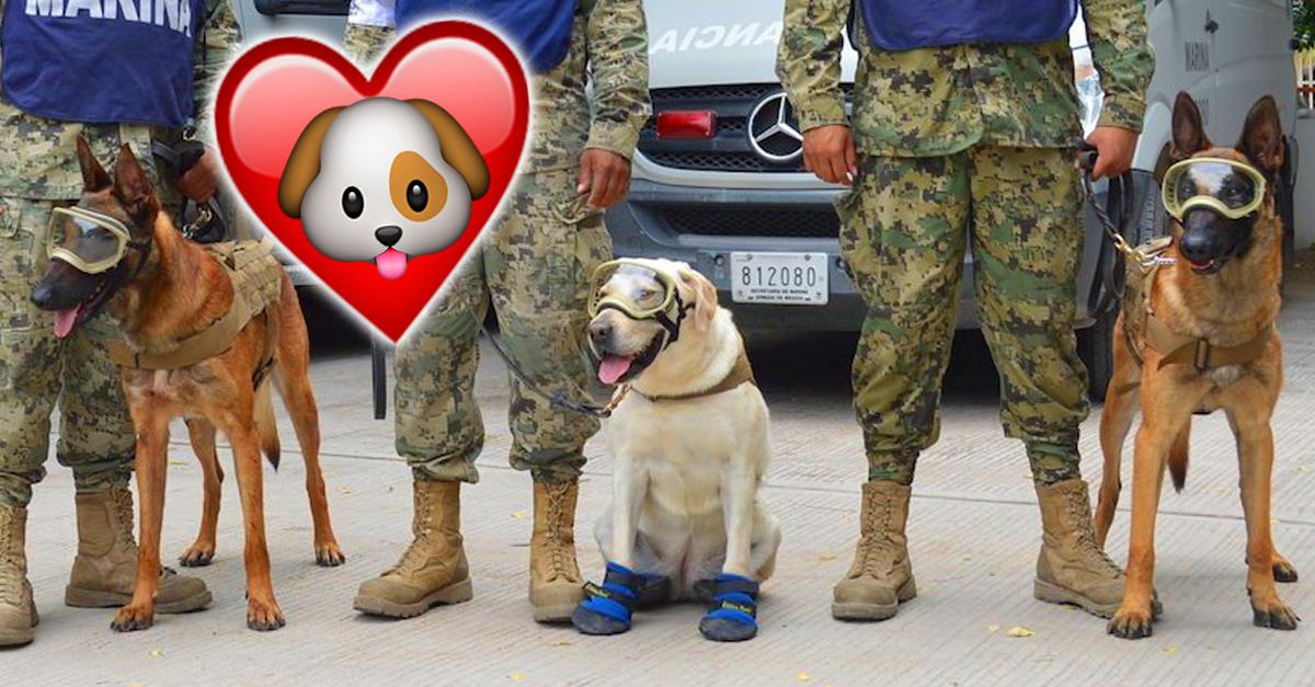 Tributo para agradecer a los perros rescatistas del terremoto en la Ciudad de México